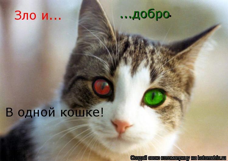 Котоматрица: Зло и... ...добро В одной кошке! .