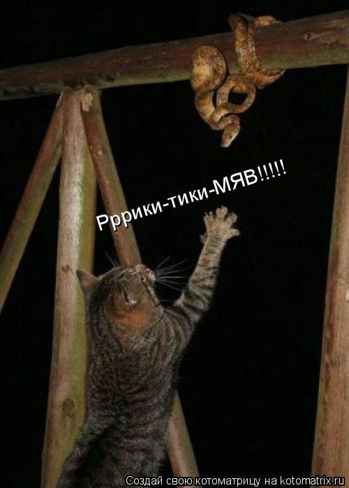 Котоматрица: Рррики-тики-МЯВ!!!!!