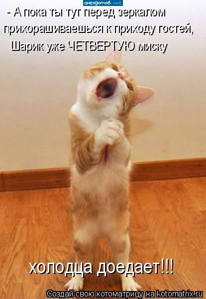 Котоматрица: - А пока ты тут перед зеркалом  прихорашиваешься к приходу гостей,  Шарик уже ЧЕТВЕРТУЮ миску  холодца доедает!!!