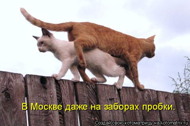 Котоматрица: В Москве даже на заборах пробки.