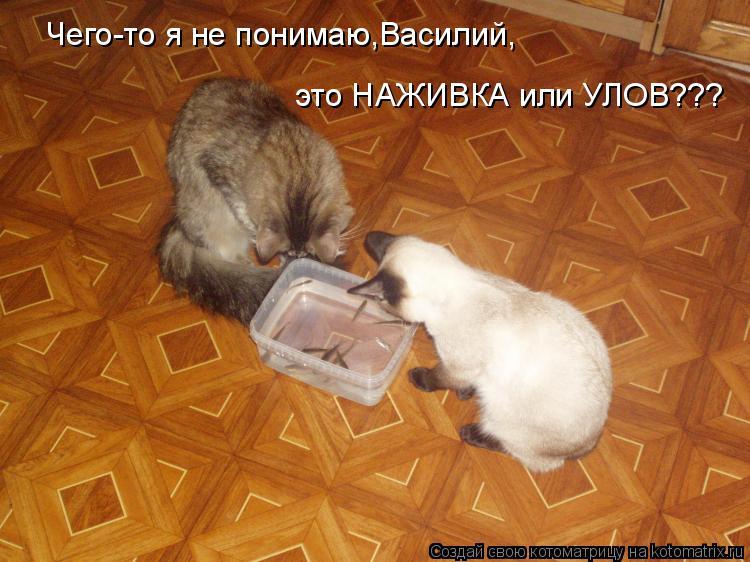 Котоматрица: Чего-то я не понимаю,Василий, это НАЖИВКА или УЛОВ???