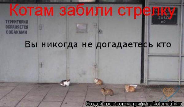Котоматрица: Котам забили стрелку Вы никогда не догадаетесь кто