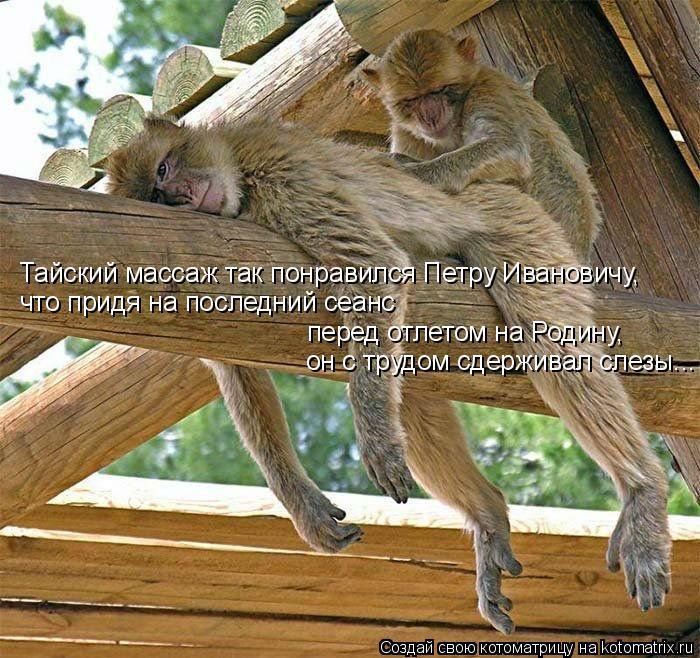 Котоматрица: Тайский массаж так понравился Петру Ивановичу,  что придя на последний сеанс  перед отлетом на Родину,  он с трудом сдерживал слезы...