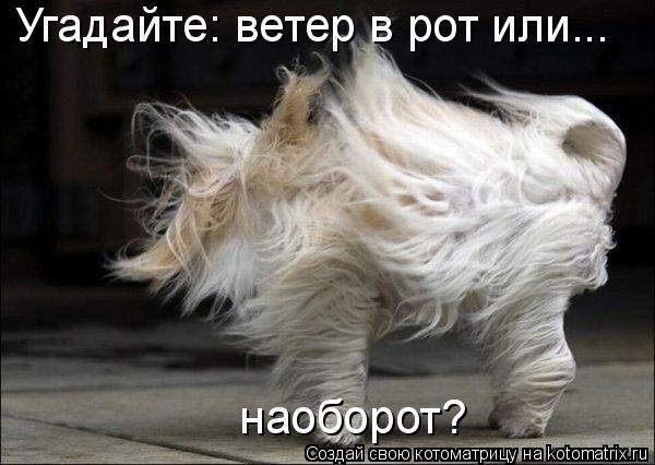 Угадайте: ветер в рот или...  наоборот?