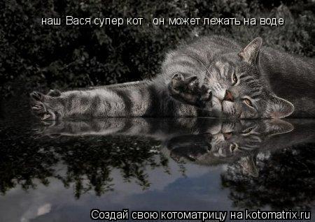 Котоматрица: наш Вася супер кот , он может лежать на воде