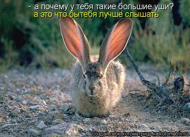 Котоматрица: а почему у тебя такие большие уши? - а это что бытебя лучше слышать