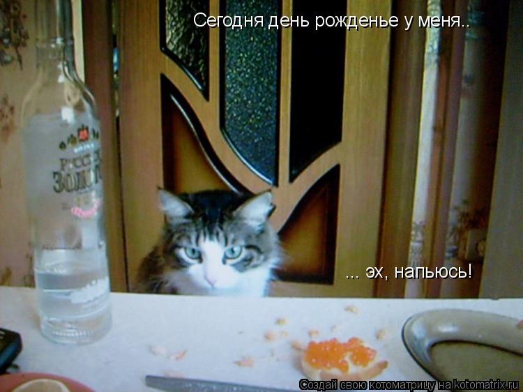 Котоматрица: Сегодня день рожденье у меня.. ... эх, напьюсь!