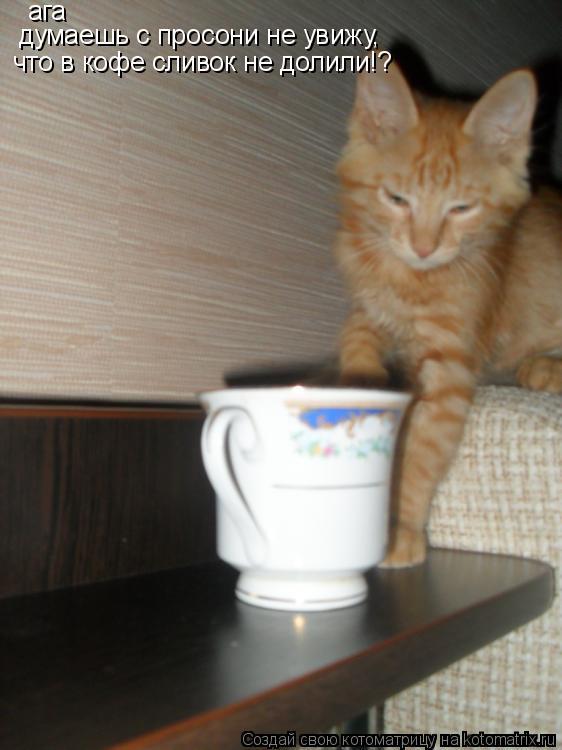 Котоматрица: ага думаешь с просони не увижу,  что в кофе сливок не долили!?