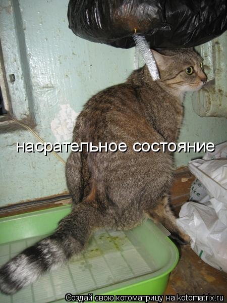 Как сделать чтобы кошка не гадила где попало