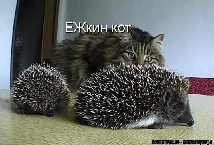 Котоматрица: ЕЖкин кот