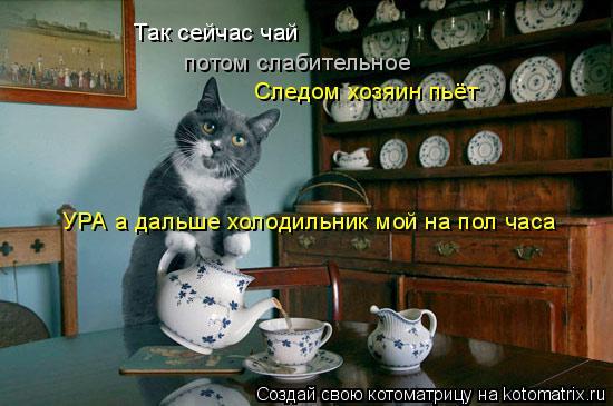 Котоматрица: Так сейчас чай потом слабительное Следом хозяин пьёт УРА а дальше холодильник мой на пол часа
