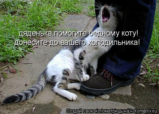 Котоматрица: дяденька,помогите бедному коту! донесите до вашего холодильника!