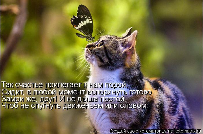 Так счастье прилетает к нам порой, Сидит, в любой момент вспорхнуть готово. Замри же, друг! И не дыша постой, Чтоб не спугнуть движеньем или словом.