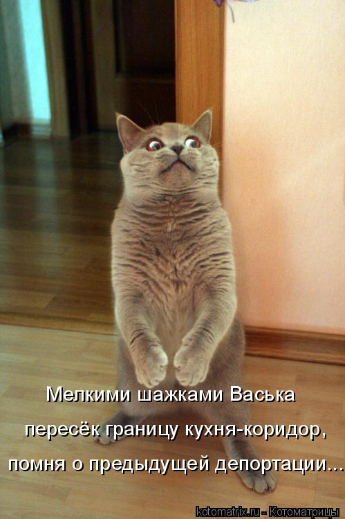 Мелкими шажками Васька пересёк границу кухня-коридор, помня о предыду