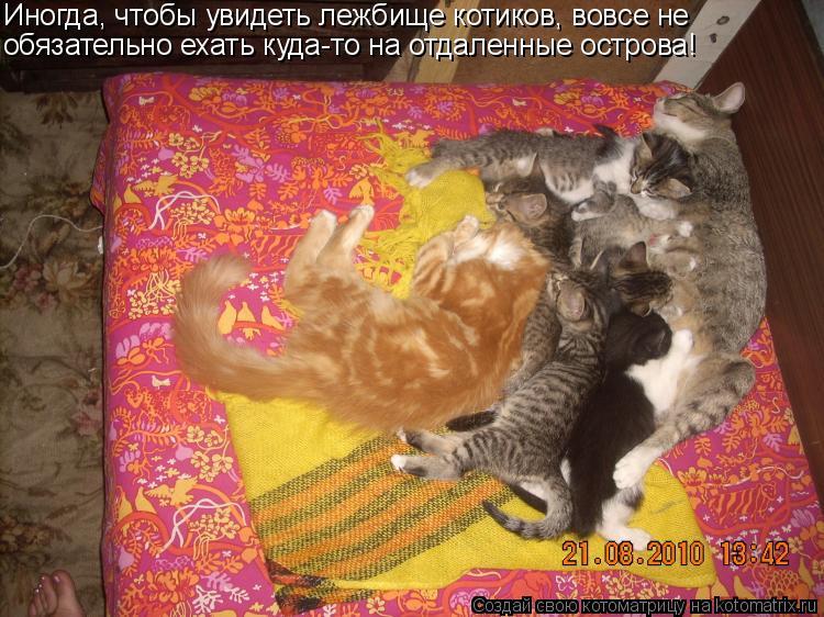 Котоматрица: Иногда, чтобы увидеть лежбище котиков, вовсе не   обязательно ехать куда-то на отдаленные острова!