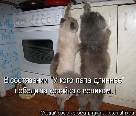 """Котоматрица: В состязании """"У кого лапа длиннее"""" победила хозяйка с веником."""