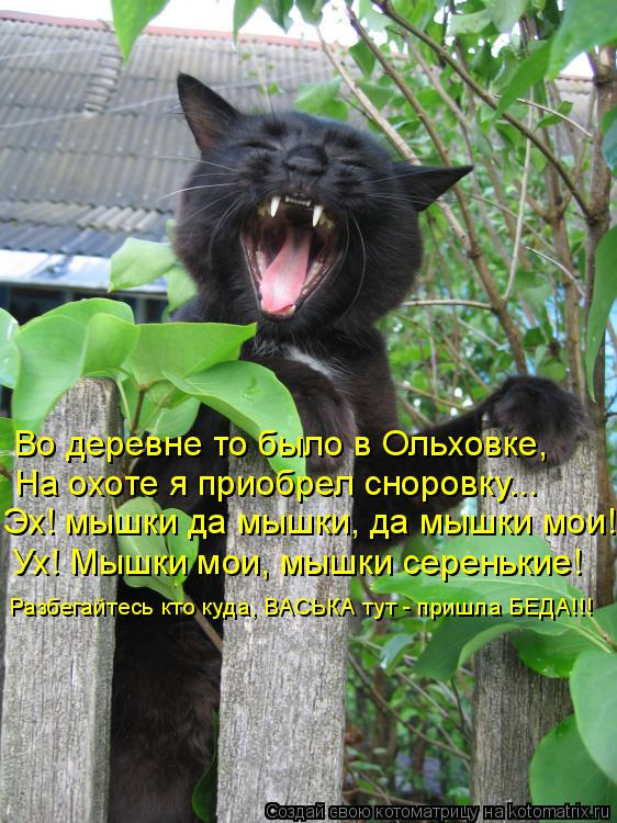 Котоматрица: Ух! Мышки мои, мышки серенькие! Во деревне то было в Ольховке, На охоте я приобрел сноровку... Разбегайтесь кто куда, ВАСЬКА тут - пришла БЕДА!!!