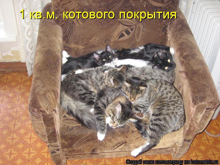 Котоматрица: 1 кв.м. котового покрытия