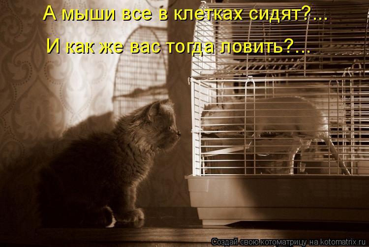 Котоматрица: А мыши все в клетках сидят?...  И как же вас тогда ловить?...
