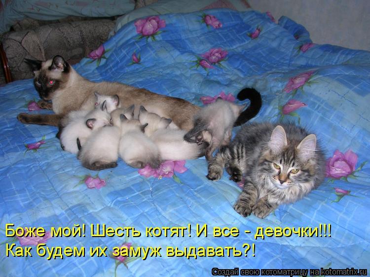 Боже мой! Шесть котят! И все - девочки!!! Как будем их замуж выдавать?