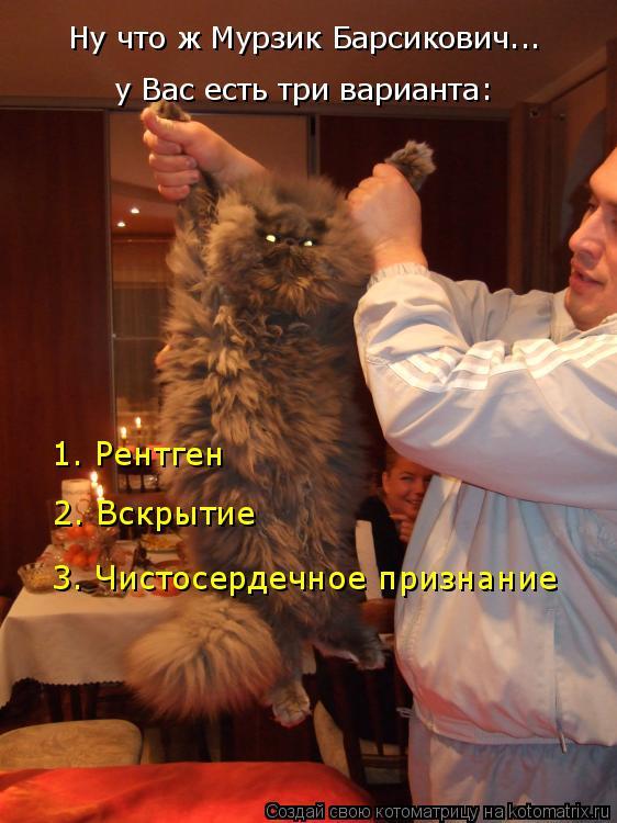 Котоматрица: Ну что ж Мурзик Барсикович... у Вас есть три варианта: 1. Рентген 2. Вскрытие 3. Чистосердечное признание