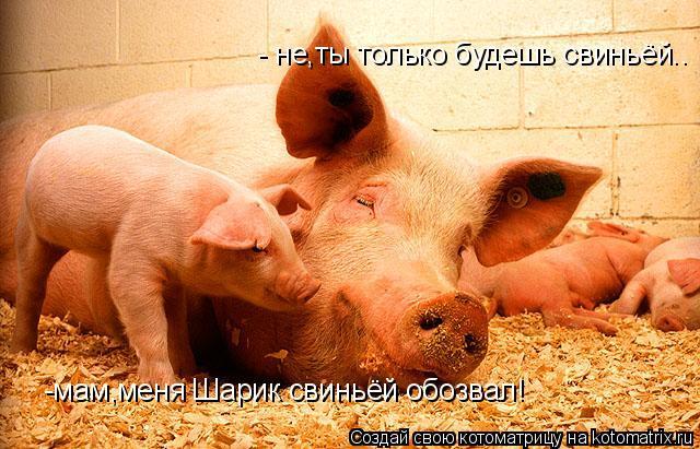 Котоматрица: -мам,меня Шарик свиньёй обозвал! - не,ты только будешь свиньёй..