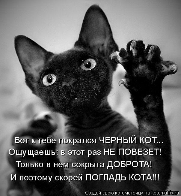 Котоматрица: Вот к тебе покрался ЧЕРНЫЙ КОТ... Ощущаешь: в этот раз НЕ ПОВЕЗЕТ! Только в нем сокрыта ДОБРОТА! И поэтому скорей ПОГЛАДЬ КОТА!!!