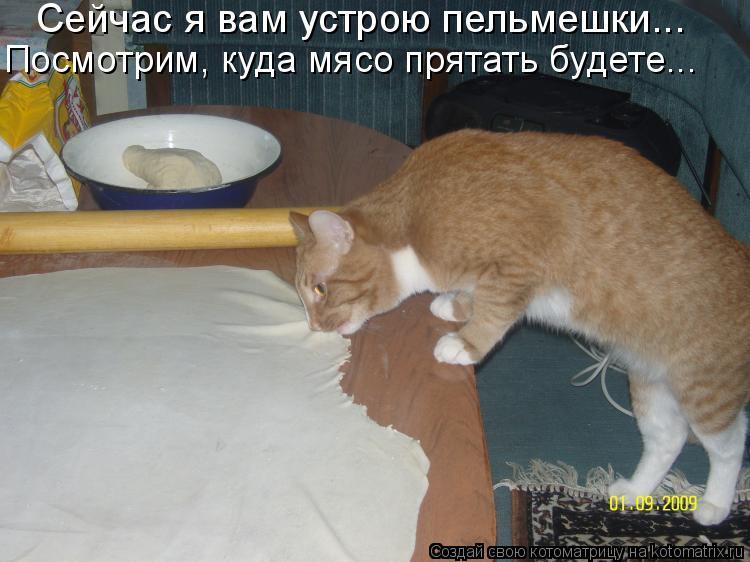 Котоматрица: Сейчас я вам устрою пельмешки... Посмотрим, куда мясо прятать будете...