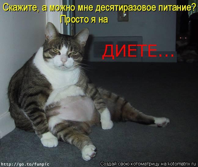 Котоматрица: Скажите, а можно мне десятиразовое питание? Просто я на ДИЕТЕ...