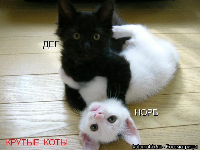 картинки коты крутые