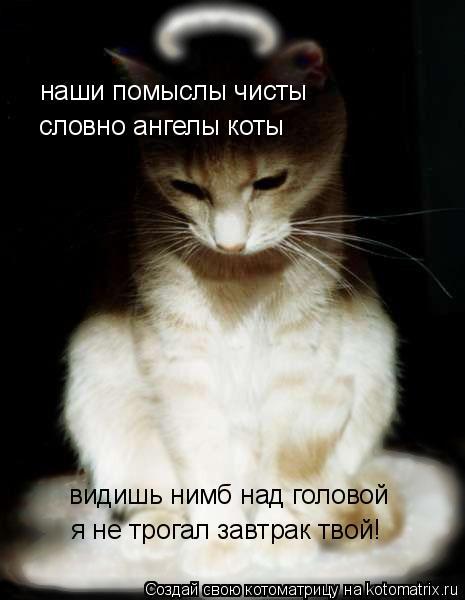 Котоматрица: наши помыслы чисты словно ангелы коты видишь нимб над головой я не трогал завтрак твой!