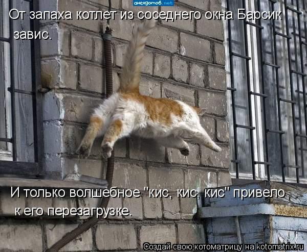 """Котоматрица: От запаха котлет из соседнего окна Барсик завис. И только волшебное """"кис, кис, кис"""" привело к его перезагрузке."""