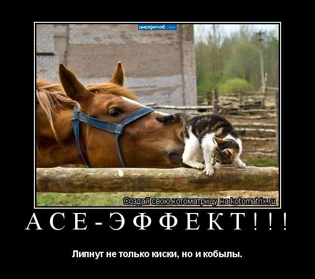 Котоматрица: АСЕ-эффект!!! Липнут не только киски, но и кобылы.