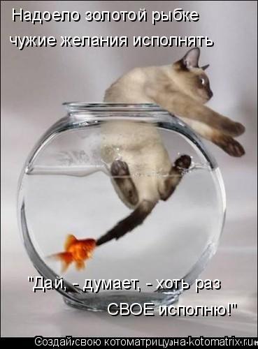 """Надоело золотой рыбке чужие желания исполнять """"Дай, - думает, - хоть р"""