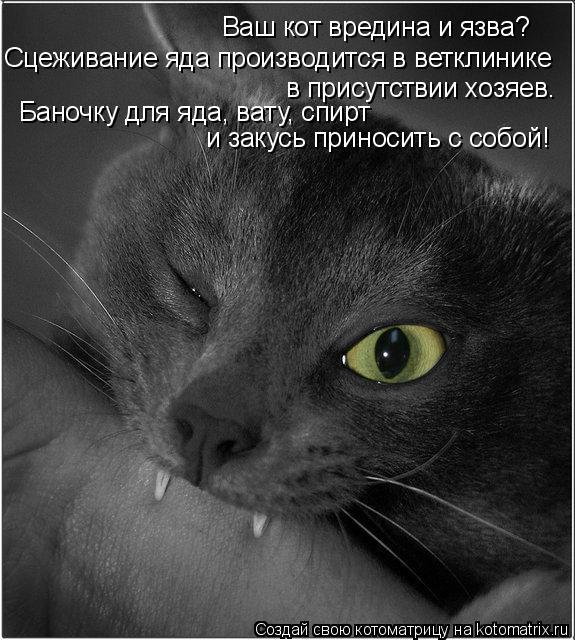 Ваш кот вредина и язва?  Сцеживание яда производится в ветклинике  в присутствии хозяев.  Баночку для яда, вату, спирт  и закусь приносить с собой!