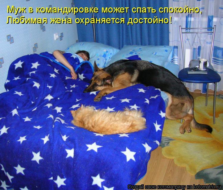 Котоматрица: Муж в командировке может спать спокойно, Любимая жена охраняется достойно!