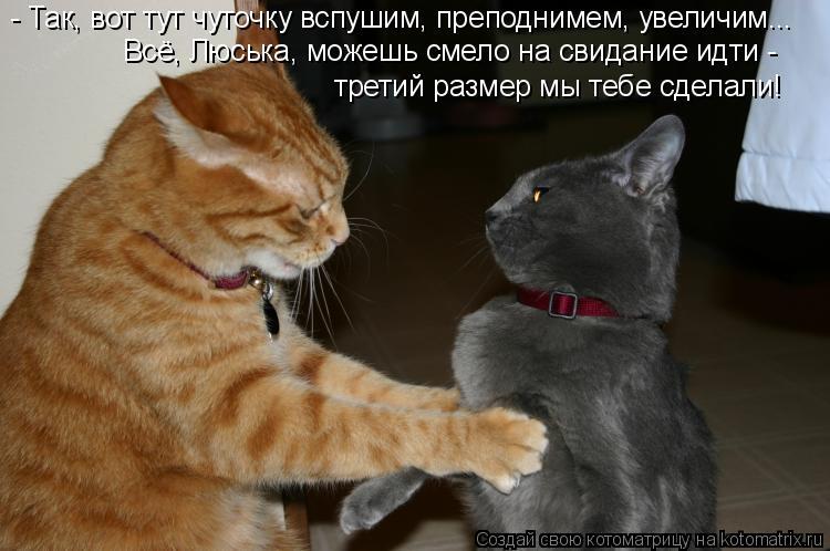 Котоматрица: - Так, вот тут чуточку вспушим, преподнимем, увеличим... Всё, Люська, можешь смело на свидание идти -  третий размер мы тебе сделали!