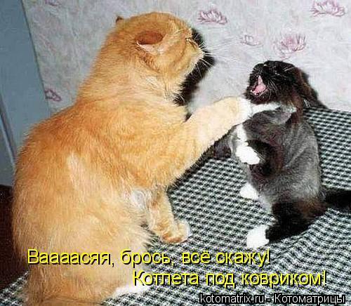 Котоматрица: Ваааасяя, брось, всё скажу!  Котлета под ковриком!