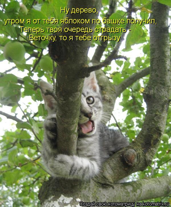 Котоматрица: Ну дерево, утром я от тебя яблоком по башке получил, Теперь твоя очередь страдать - Веточку, то я тебе отгрызу