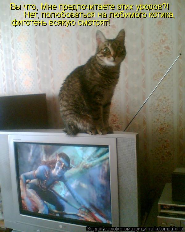 Котоматрица: Вы что, Мне предпочитаете этих уродов?! Нет, полюбоваться на любимого котика,  фиготень всякую смотрят!
