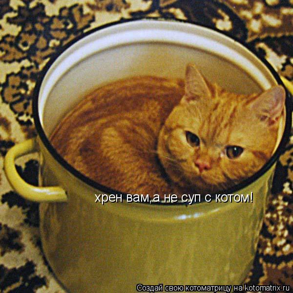 Котоматрица: хрен вам,а не суп с котом!