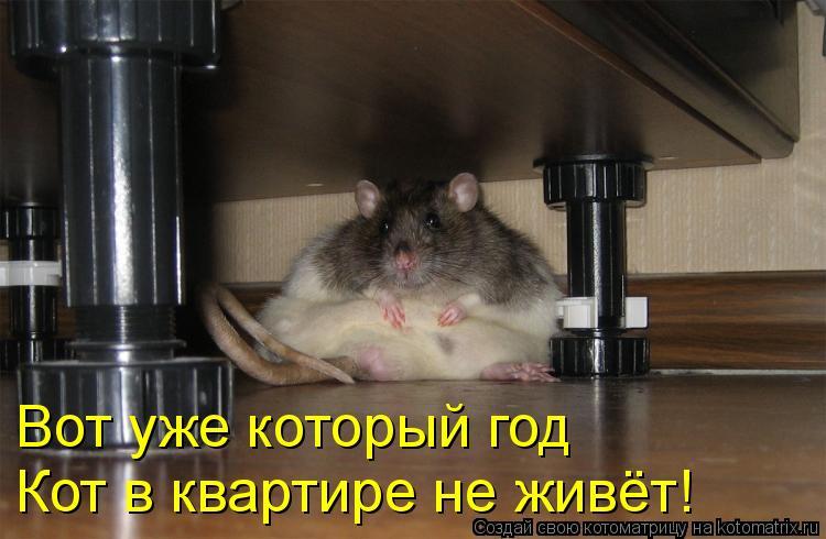 Вот уже который год  Кот в квартире не живёт!
