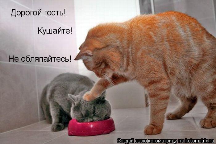 Дорогой гость! Кушайте! Не обляпайтесь!