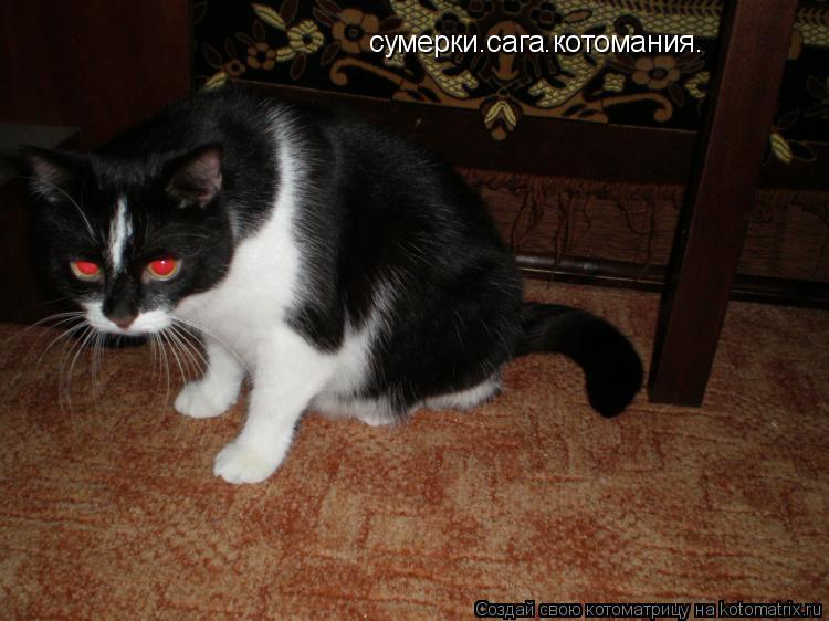 Котоматрица: сумерки.сага.котомания.