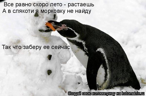 Котоматрица: Все равно скоро лето - растаешь А в слякоти я морковку не найду Так что заберу ее сейчас