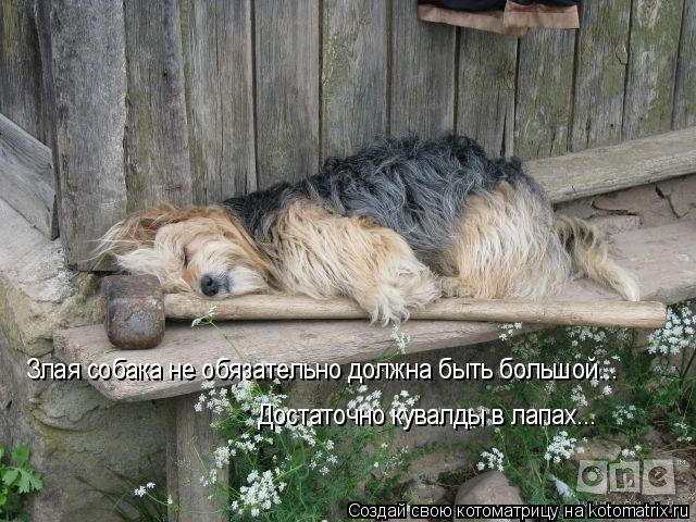 Злая собака не обязательно должна быть большой... Достаточно кувалды в