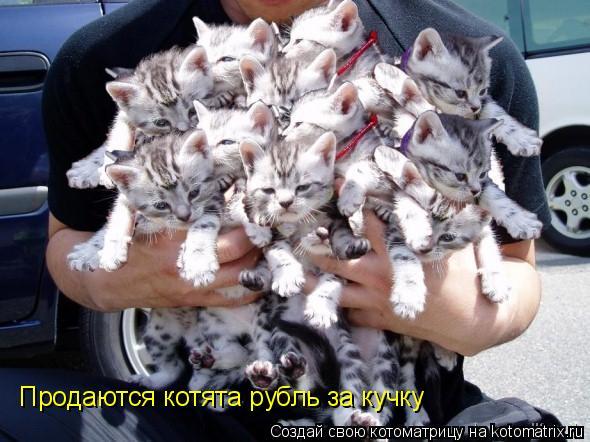 Котоматрица: Продаются котята рубль за кучку