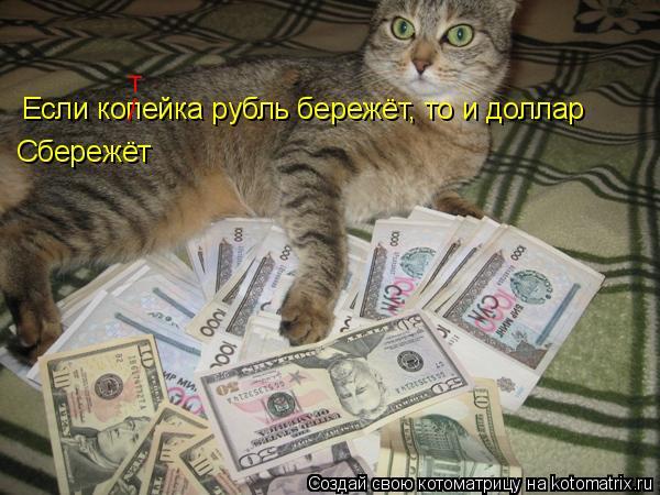 Котоматрица: Если копейка рубль бережёт, то и доллар Сбережёт / т