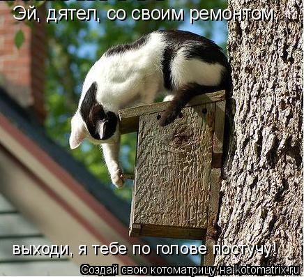 Котоматрица: Эй, дятел, со своим ремонтом,  выходи, я тебе по голове постучу!