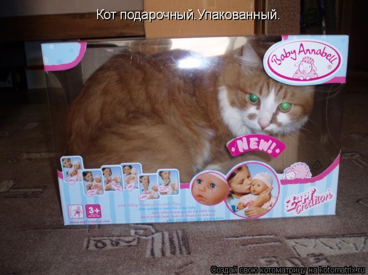 Котоматрица: Кот подарочный.Упакованный.